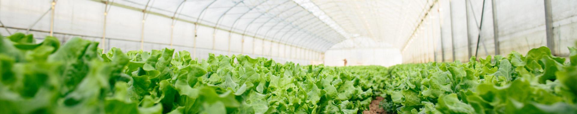 Agrar- und Ernährungwirtschaft